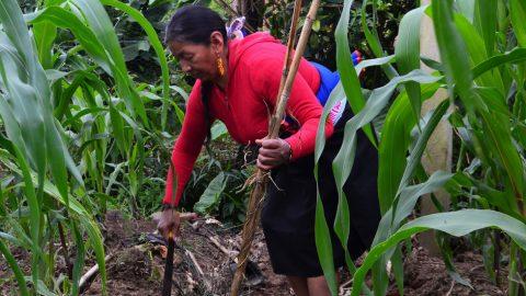Agroecología y Feminismo